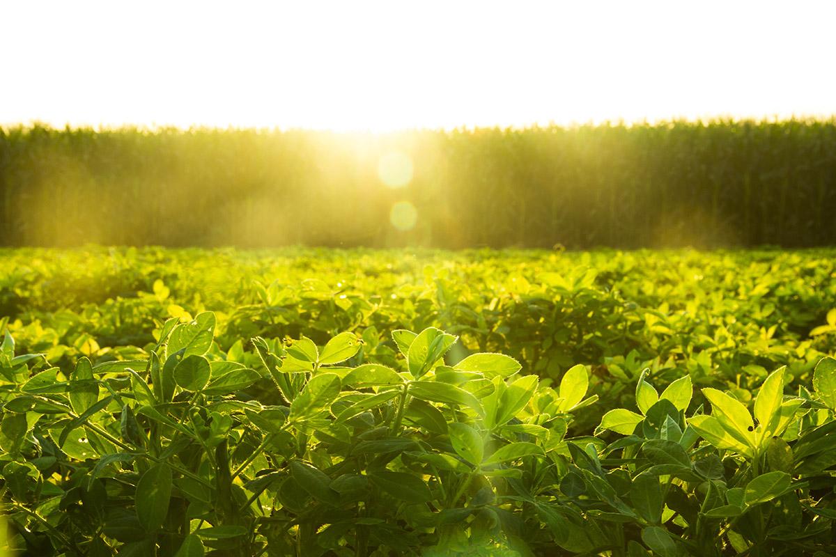 Nuts & Grains | U.S. Based Food Commodities Exports | Agri International LLC